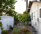 Backyard, side yard with citrus trees and raised beds